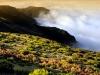 Naturpark auf Madeira