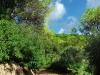 Waldgebiet Madeira