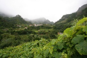 Madeira Weinanbau